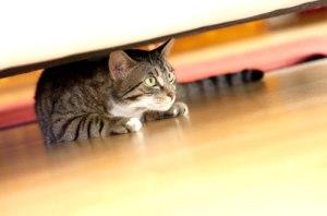anxious-cat